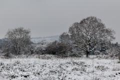 A snowy day near Radyr