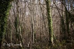 Radyr Woods