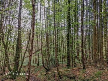 Woods near Gwaelod y Garth