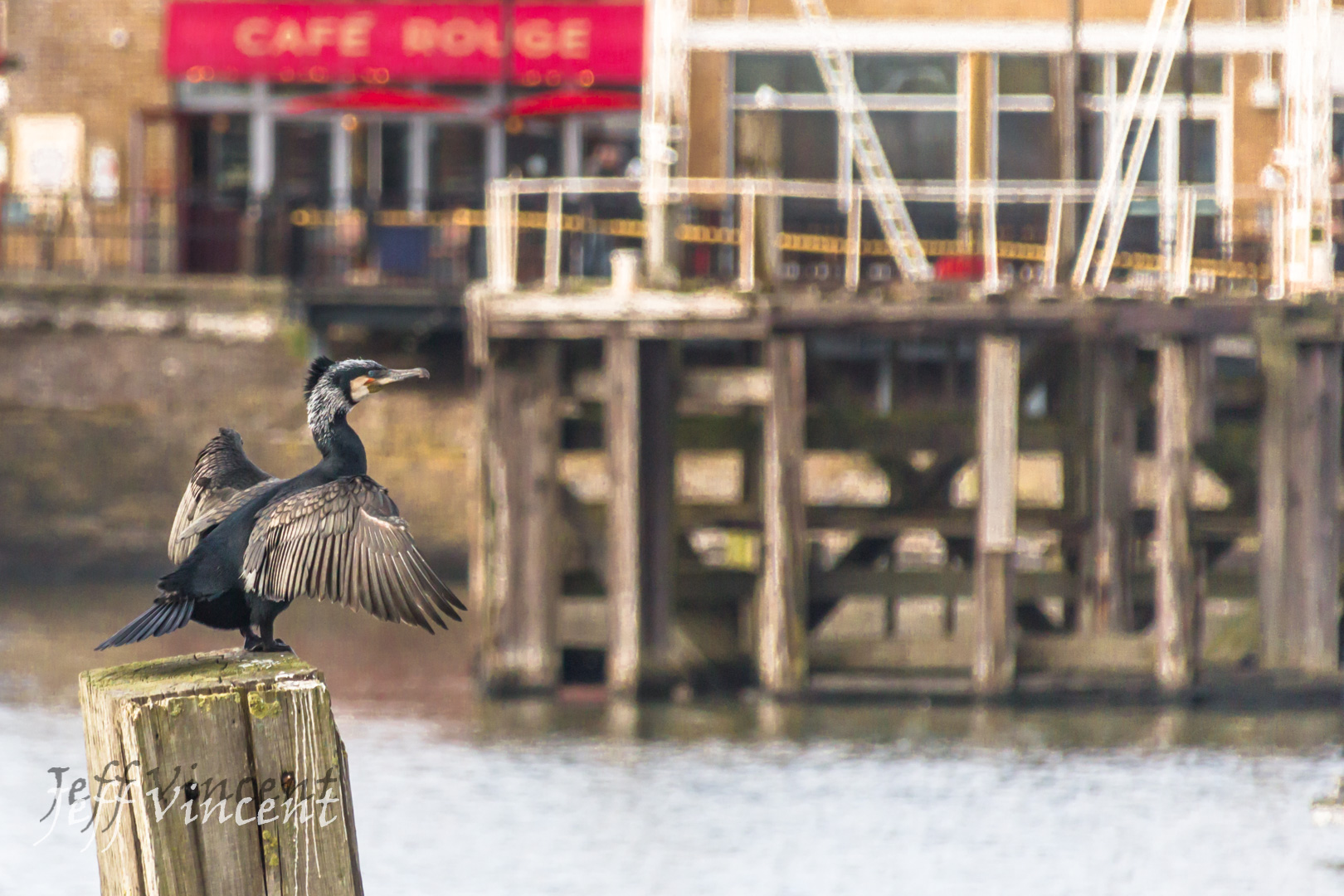 Cafe Cormorant