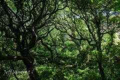 Magical Woodland