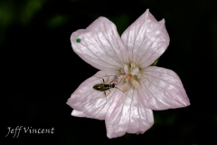 Flower with Bug