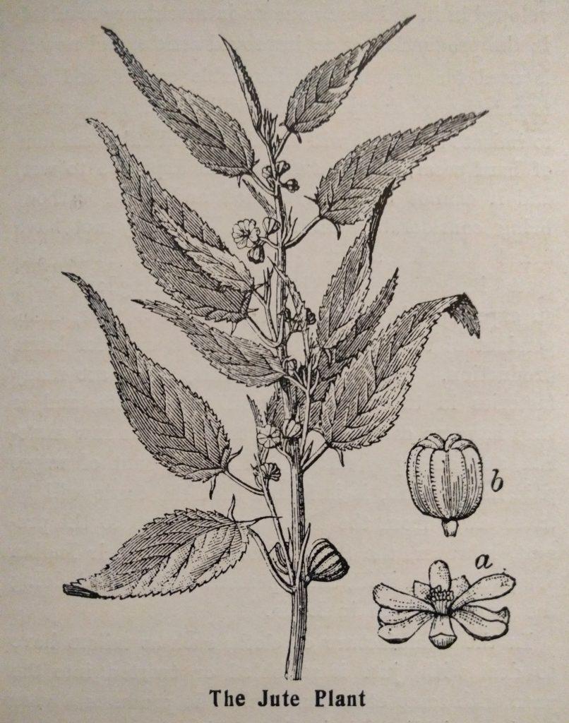 The Jute Plant
