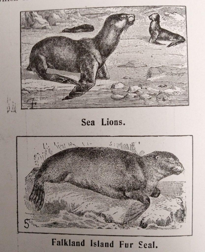 Sea Lion and Falkland Island Fur Seal