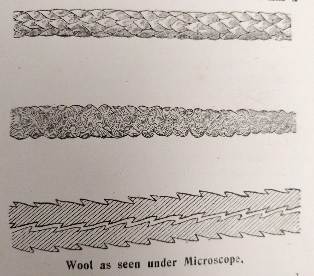Wool as seen under a microscope